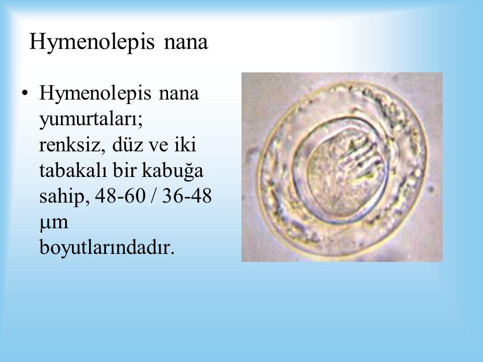 Hymenolepis nana Hymenolepis nana yumurtaları; renksiz, düz ve iki tabakalı bir kabuğa sahip, 48-60 / 36-48  m boyutlarındadır.