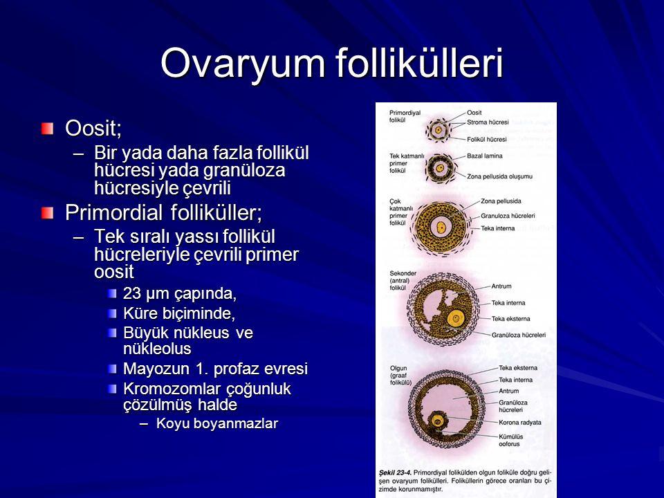 Ovaryum follikülleri Oosit; –Bir yada daha fazla follikül hücresi yada granüloza hücresiyle çevrili Primordial folliküller; –Tek sıralı yassı follikül hücreleriyle çevrili primer oosit 23 µm çapında, Küre biçiminde, Büyük nükleus ve nükleolus Mayozun 1.