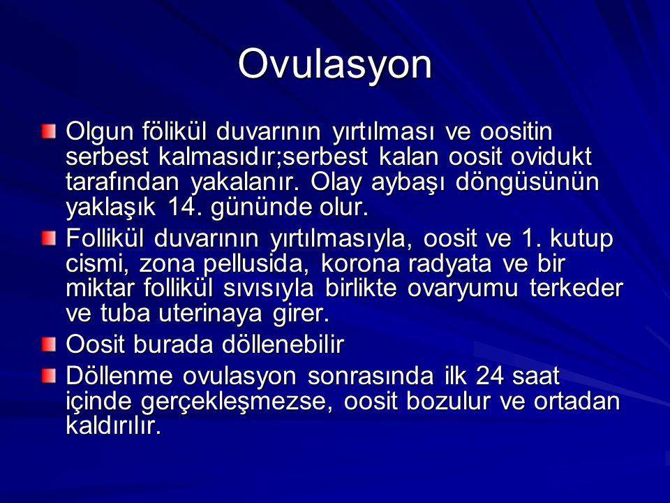 Ovulasyon Olgun fölikül duvarının yırtılması ve oositin serbest kalmasıdır;serbest kalan oosit ovidukt tarafından yakalanır.