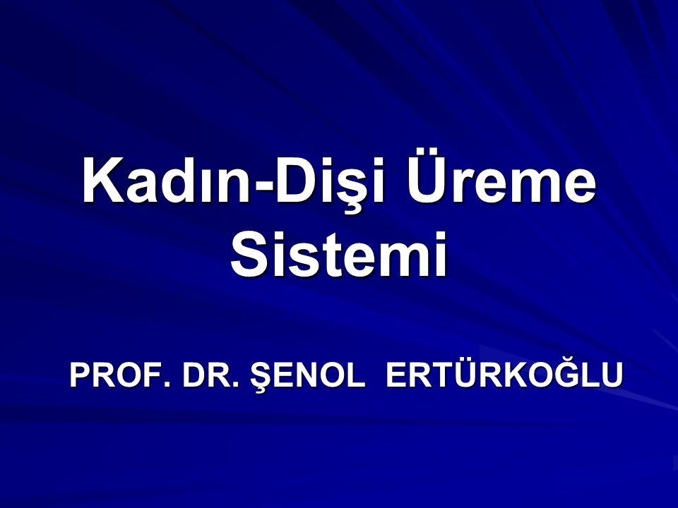 Kadın-Dişi Üreme Sistemi PROF. DR. ŞENOL ERTÜRKOĞLU