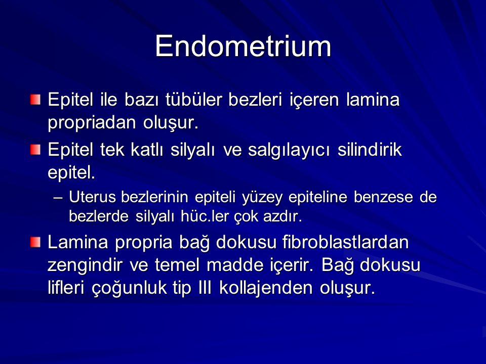 Endometrium Epitel ile bazı tübüler bezleri içeren lamina propriadan oluşur.