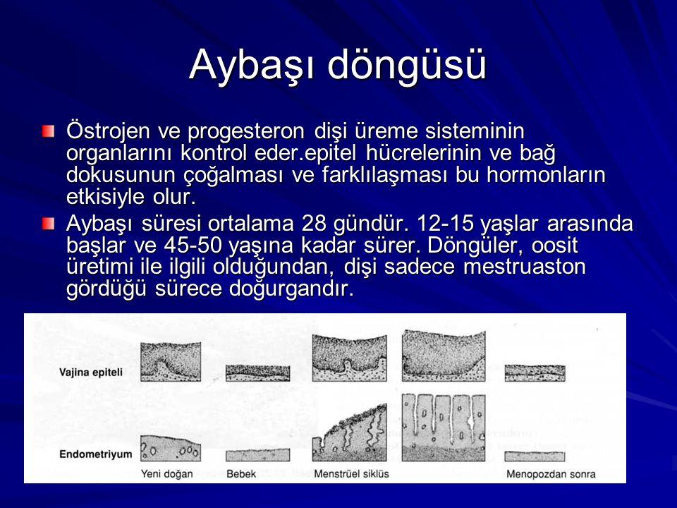Aybaşı döngüsü Östrojen ve progesteron dişi üreme sisteminin organlarını kontrol eder.epitel hücrelerinin ve bağ dokusunun çoğalması ve farklılaşması bu hormonların etkisiyle olur.