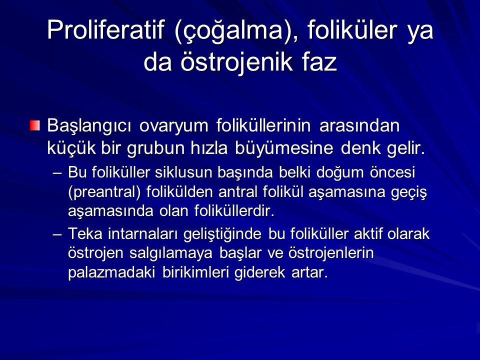 Proliferatif (çoğalma), foliküler ya da östrojenik faz Başlangıcı ovaryum foliküllerinin arasından küçük bir grubun hızla büyümesine denk gelir.