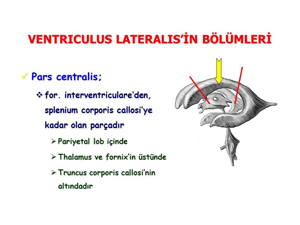VENTRICULUS LATERALIS'İN BÖLÜMLERİ Pars centralis; Pars centralis;  for. interventriculare'den, splenium corporis callosi'ye kadar olan parçadır  Pa