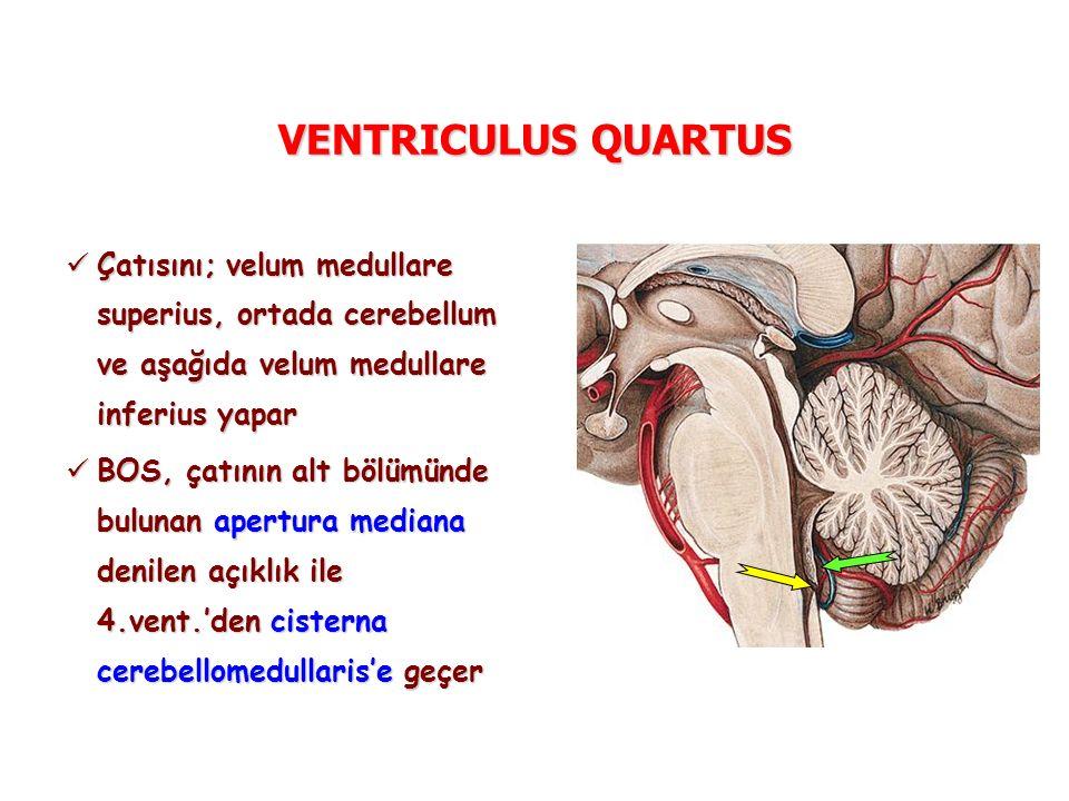 VENTRICULUS QUARTUS Çatısını; velum medullare superius, ortada cerebellum ve aşağıda velum medullare inferius yapar Çatısını; velum medullare superius