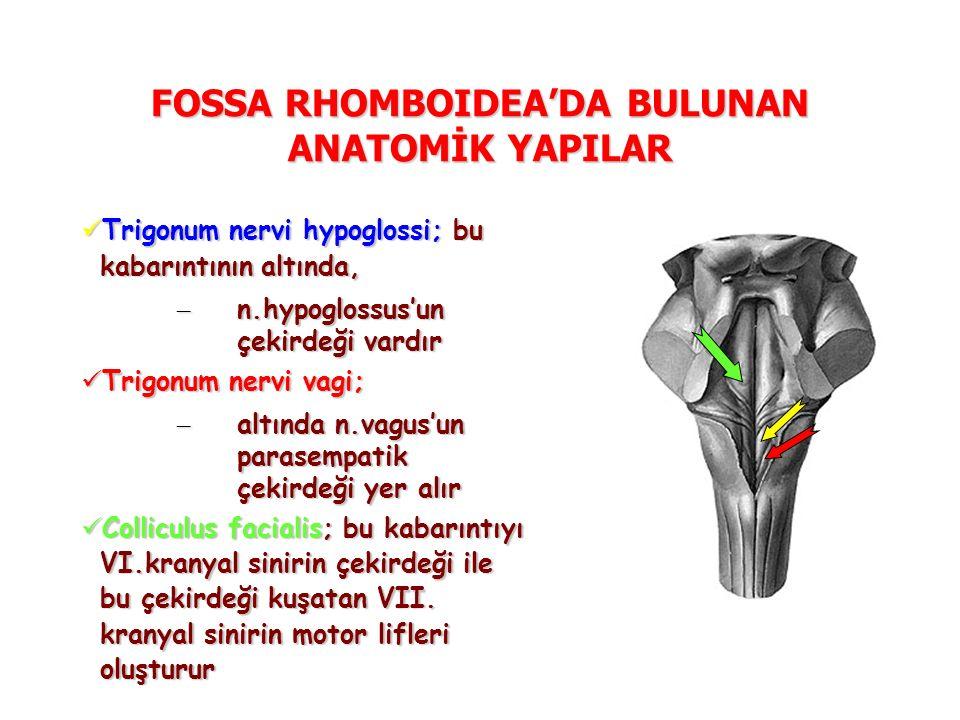 FOSSA RHOMBOIDEA'DA BULUNAN ANATOMİK YAPILAR Trigonum nervi hypoglossi; bu kabarıntının altında, Trigonum nervi hypoglossi; bu kabarıntının altında, – n.hypoglossus'un çekirdeği vardır Trigonum nervi vagi; Trigonum nervi vagi; – altında n.vagus'un parasempatik çekirdeği yer alır Colliculus facialis; bu kabarıntıyı VI.kranyal sinirin çekirdeği ile bu çekirdeği kuşatan VII.