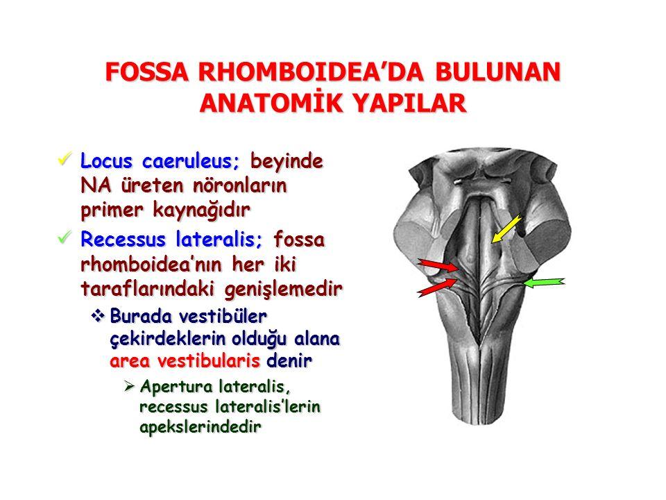 FOSSA RHOMBOIDEA'DA BULUNAN ANATOMİK YAPILAR Locus caeruleus; beyinde NA üreten nöronların primer kaynağıdır Locus caeruleus; beyinde NA üreten nöronların primer kaynağıdır Recessus lateralis; fossa rhomboidea'nın her iki taraflarındaki genişlemedir Recessus lateralis; fossa rhomboidea'nın her iki taraflarındaki genişlemedir  Burada vestibüler çekirdeklerin olduğu alana area vestibularis denir  Apertura lateralis, recessus lateralis'lerin apekslerindedir