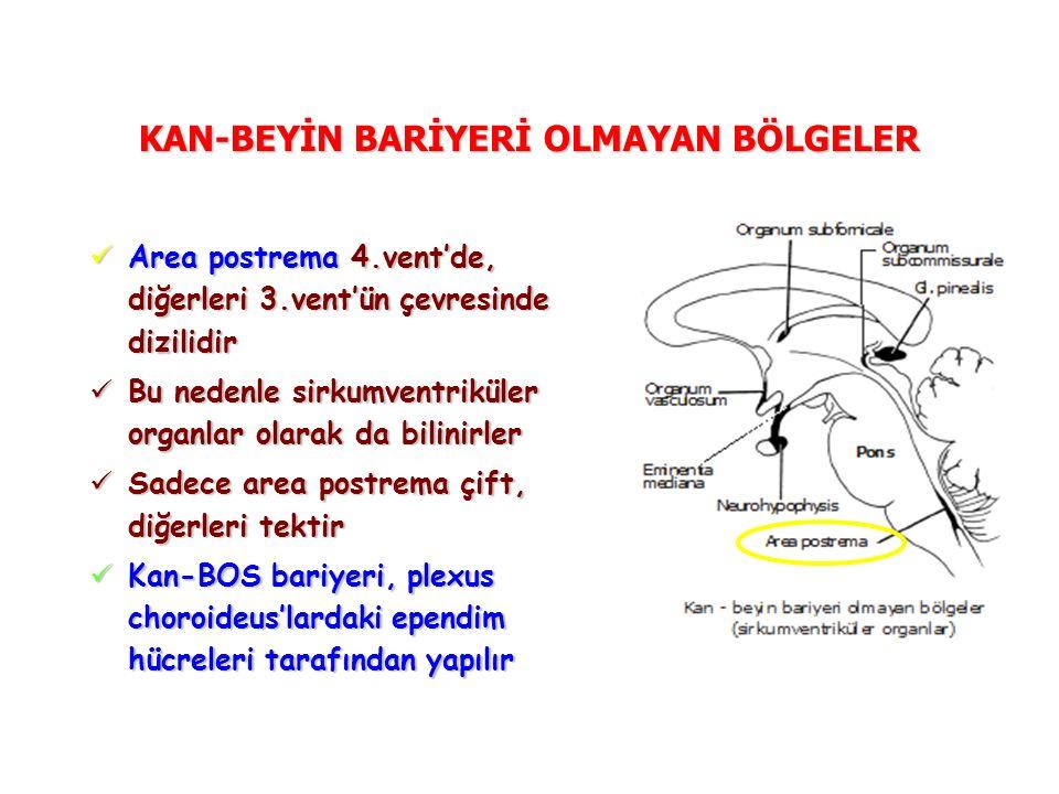 KAN-BEYİN BARİYERİ OLMAYAN BÖLGELER Area postrema 4.vent'de, diğerleri 3.vent'ün çevresinde dizilidir Area postrema 4.vent'de, diğerleri 3.vent'ün çevresinde dizilidir Bu nedenle sirkumventriküler organlar olarak da bilinirler Bu nedenle sirkumventriküler organlar olarak da bilinirler Sadece area postrema çift, diğerleri tektir Sadece area postrema çift, diğerleri tektir Kan-BOS bariyeri, plexus choroideus'lardaki ependim hücreleri tarafından yapılır Kan-BOS bariyeri, plexus choroideus'lardaki ependim hücreleri tarafından yapılır