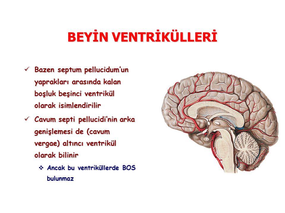 BEYİN VENTRİKÜLLERİ Bazen septum pellucidum'un yaprakları arasında kalan boşluk beşinci ventrikül olarak isimlendirilir Bazen septum pellucidum'un yaprakları arasında kalan boşluk beşinci ventrikül olarak isimlendirilir Cavum septi pellucidi'nin arka genişlemesi de (cavum vergae) altıncı ventrikül olarak bilinir Cavum septi pellucidi'nin arka genişlemesi de (cavum vergae) altıncı ventrikül olarak bilinir  Ancak bu ventriküllerde BOS bulunmaz
