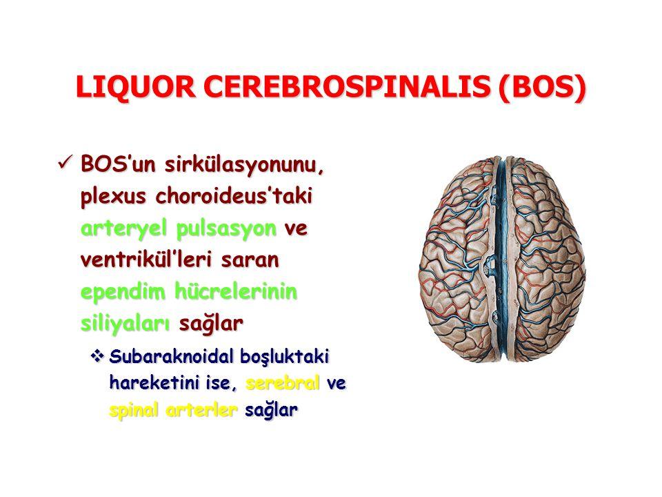LIQUOR CEREBROSPINALIS (BOS) BOS'un sirkülasyonunu, plexus choroideus'taki arteryel pulsasyon ve ventrikül'leri saran ependim hücrelerinin siliyaları sağlar BOS'un sirkülasyonunu, plexus choroideus'taki arteryel pulsasyon ve ventrikül'leri saran ependim hücrelerinin siliyaları sağlar  Subaraknoidal boşluktaki hareketini ise, serebral ve spinal arterler sağlar