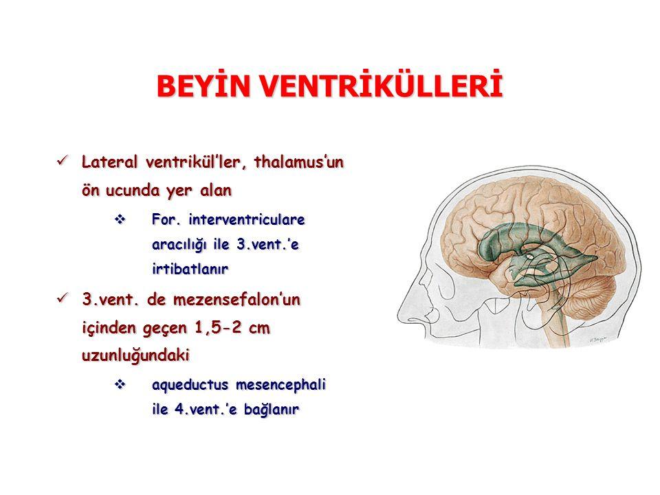 BEYİN VENTRİKÜLLERİ Lateral ventrikül'ler, thalamus'un ön ucunda yer alan Lateral ventrikül'ler, thalamus'un ön ucunda yer alan  For. interventricula