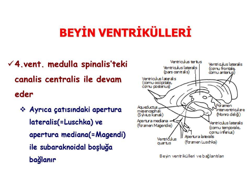 BEYİN VENTRİKÜLLERİ 4.vent. medulla spinalis'teki canalis centralis ile devam eder 4.vent. medulla spinalis'teki canalis centralis ile devam eder  Ay