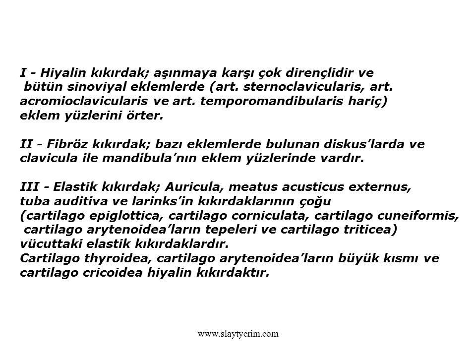 www.slaytyerim.com I - Hiyalin kıkırdak; aşınmaya karşı çok dirençlidir ve bütün sinoviyal eklemlerde (art. sternoclavicularis, art. acromioclavicular