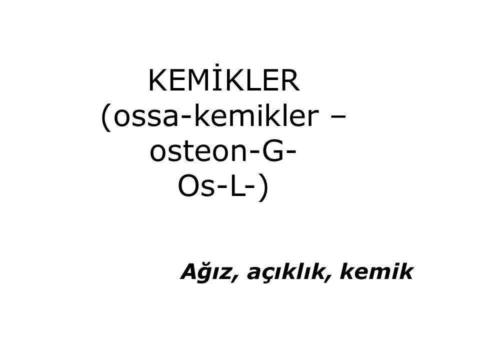 KEMİKLER (ossa-kemikler – osteon-G- Os-L-) Ağız, açıklık, kemik