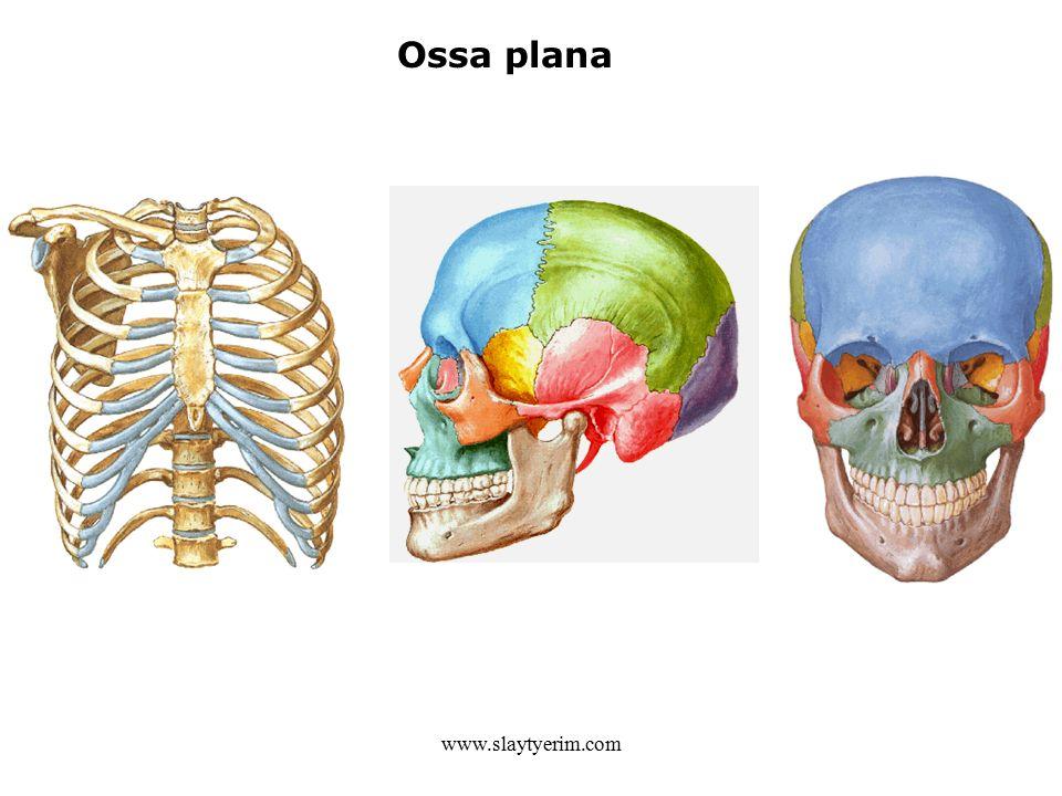 www.slaytyerim.com Ossa plana