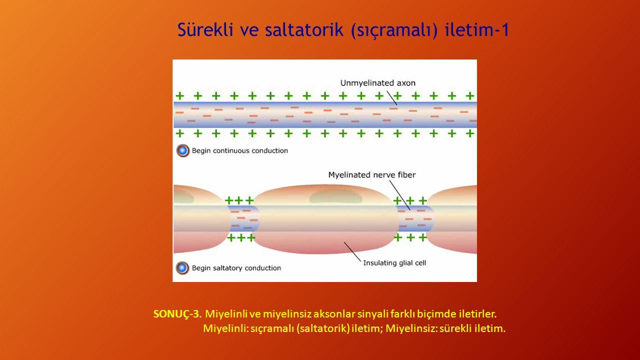 Sürekli ve saltatorik (sıçramalı) iletim-1 SONUÇ-3. Miyelinli ve miyelinsiz aksonlar sinyali farklı biçimde iletirler. Miyelinli: sıçramalı (saltatori