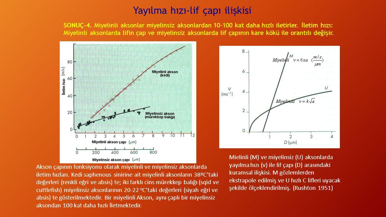 Yayılma hızı-lif çapı ilişkisi Mielinli (M) ve miyelinsiz (U) aksonlarda yayılma hızı (v) ile lif çapı (D) arasındaki kuramsal ilişkisi.