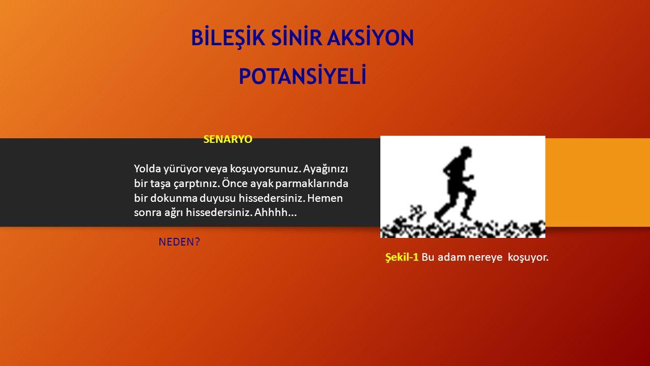 Zaman Sabiti ( τ )