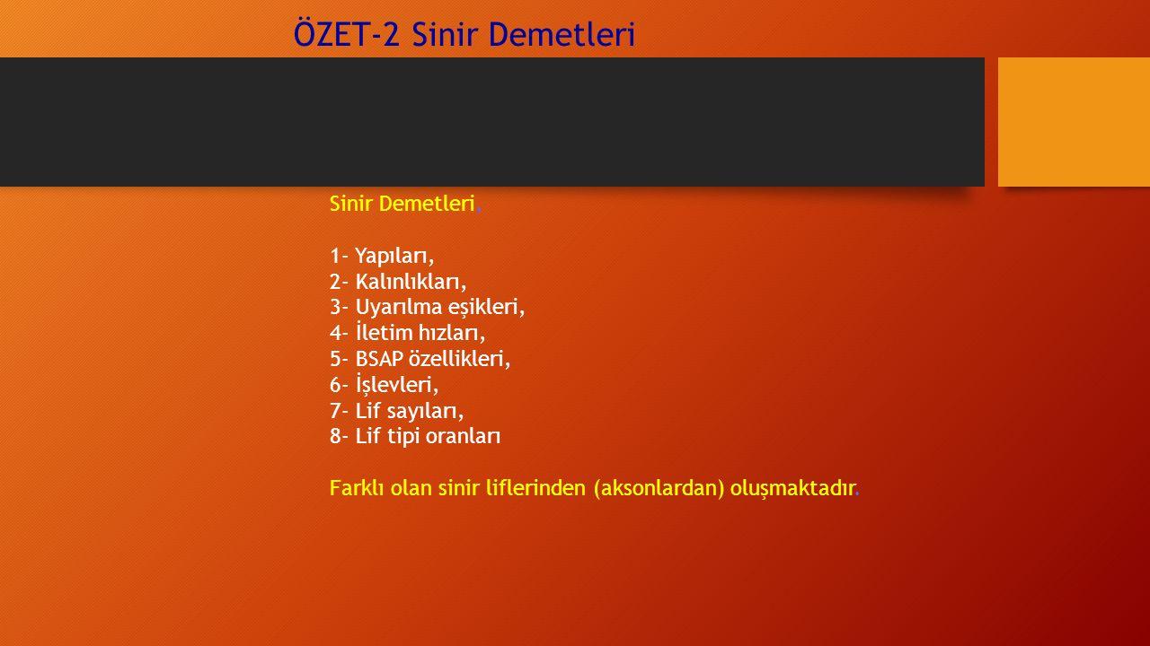 ÖZET-2 Sinir Demetleri Sinir Demetleri, 1- Yapıları, 2- Kalınlıkları, 3- Uyarılma eşikleri, 4- İletim hızları, 5- BSAP özellikleri, 6- İşlevleri, 7- Lif sayıları, 8- Lif tipi oranları Farklı olan sinir liflerinden (aksonlardan) oluşmaktadır.