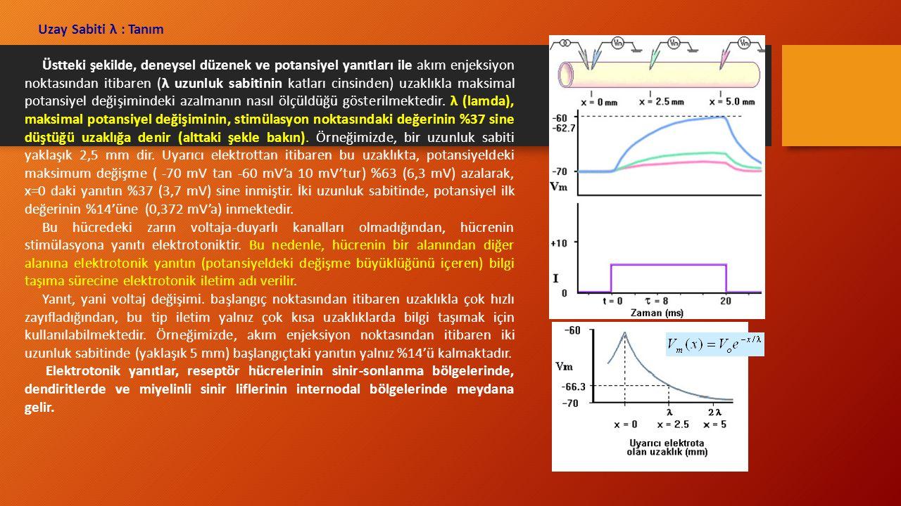Uzay Sabiti λ : Tanım Üstteki şekilde, deneysel düzenek ve potansiyel yanıtları ile akım enjeksiyon noktasından itibaren (λ uzunluk sabitinin katları cinsinden) uzaklıkla maksimal potansiyel değişimindeki azalmanın nasıl ölçüldüğü gösterilmektedir.