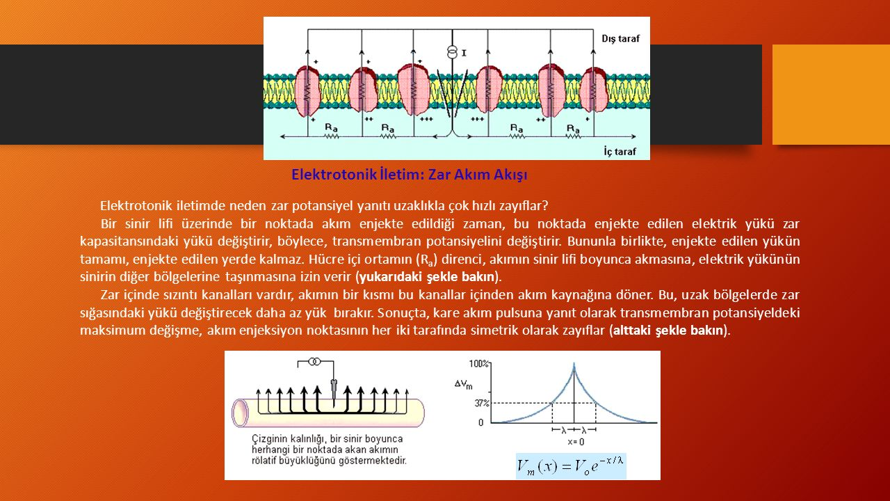 Elektrotonik İletim: Zar Akım Akışı Elektrotonik iletimde neden zar potansiyel yanıtı uzaklıkla çok hızlı zayıflar.