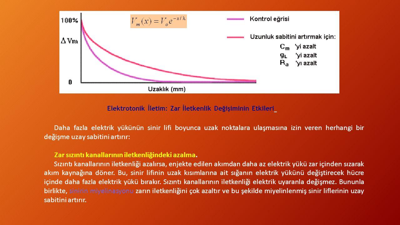 Elektrotonik İletim: Zar İletkenlik Değişiminin Etkileri Daha fazla elektrik yükünün sinir lifi boyunca uzak noktalara ulaşmasına izin veren herhangi bir değişme uzay sabitini artırır: Zar sızıntı kanallarının iletkenliğindeki azalma.