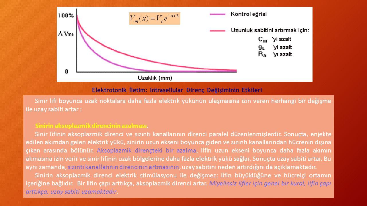 Elektrotonik İletim: Intrasellular Direnç Değişiminin Etkileri Sinir lifi boyunca uzak noktalara daha fazla elektrik yükünün ulaşmasına izin veren her