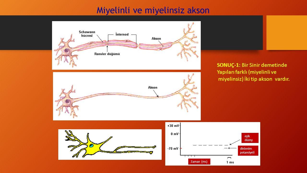 Miyelinli ve miyelinsiz akson SONUÇ-1: Bir Sinir demetinde Yapıları farklı (miyelinli ve miyelinsiz) İki tip akson vardır.