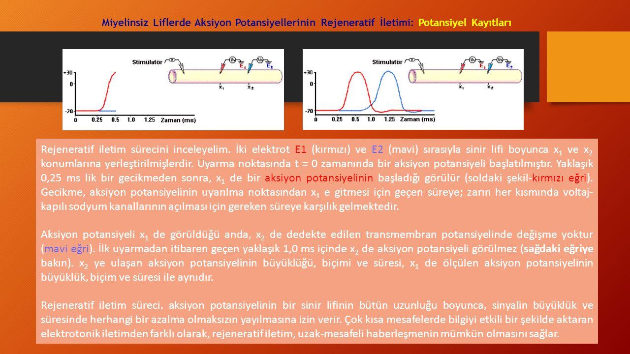 Miyelinsiz Liflerde Aksiyon Potansiyellerinin Rejeneratif İletimi: Potansiyel Kayıtları Rejeneratif iletim sürecini inceleyelim. İki elektrot E1 (kırm