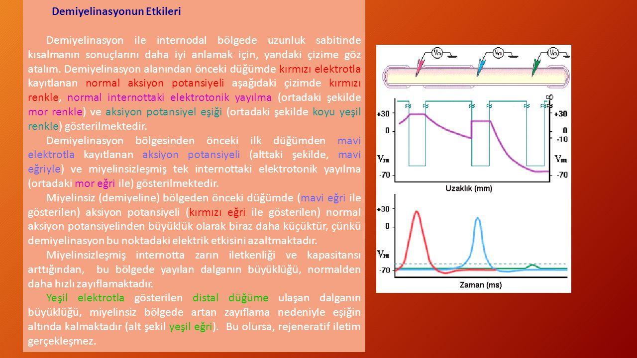 Demiyelinasyonun Etkileri Demiyelinasyon ile internodal bölgede uzunluk sabitinde kısalmanın sonuçlarını daha iyi anlamak için, yandaki çizime göz ata