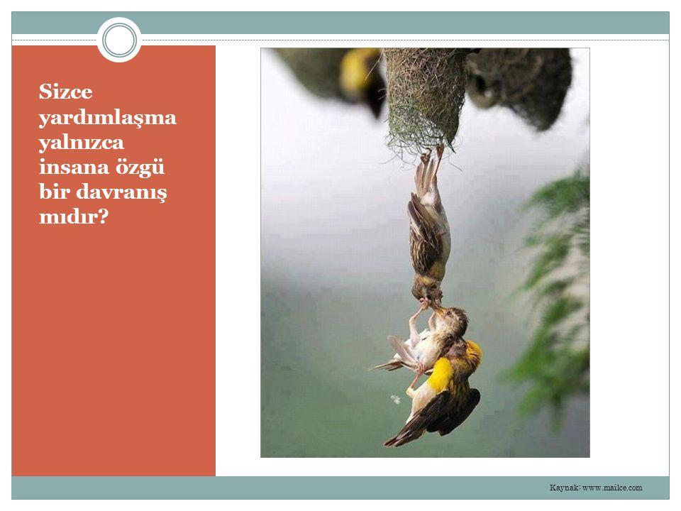 Sizce yardımlaşma yalnızca insana özgü bir davranış mıdır? Kaynak: www.mailce.com