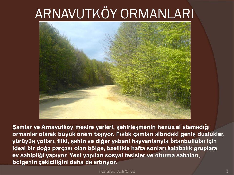 ARNAVUTKÖY ORMANLARI Şamlar ve Arnavutköy mesire yerleri, şehirleşmenin henüz el atamadığı ormanlar olarak büyük önem taşıyor.