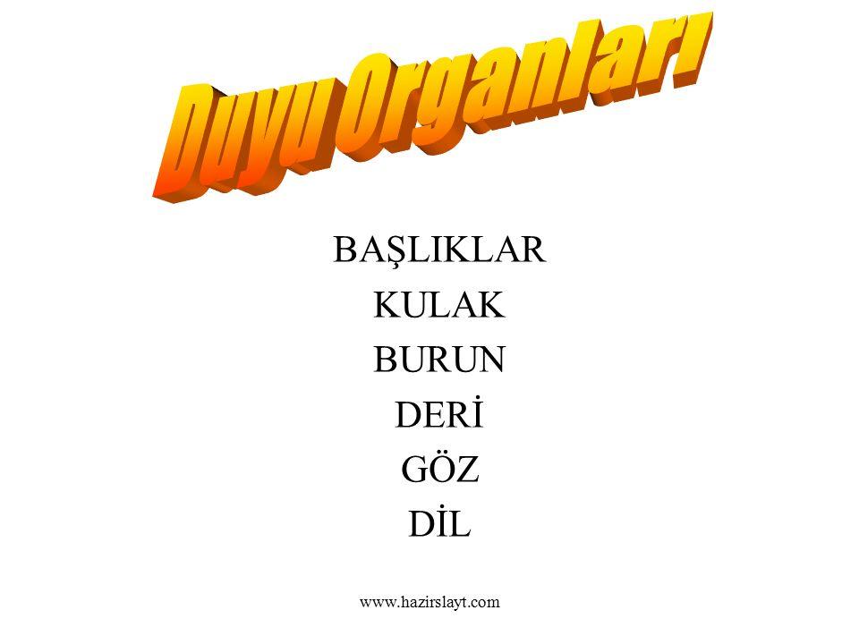 www.hazirslayt.com BAŞLIKLAR KULAK BURUN DERİ GÖZ DİL