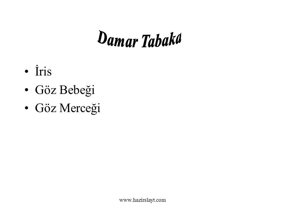 www.hazirslayt.com İris Göz Bebeği Göz Merceği