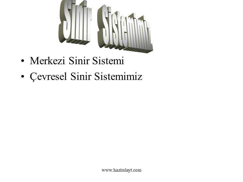 www.hazirslayt.com Merkezi Sinir Sistemi Çevresel Sinir Sistemimiz