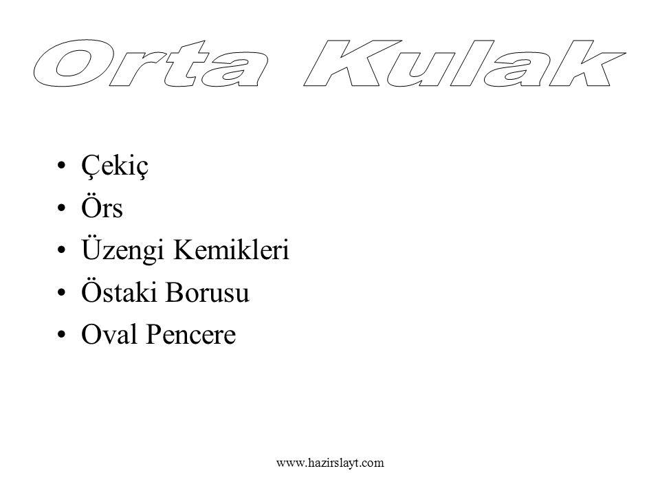 www.hazirslayt.com Dalız Salyangoz(Koklea) Yarım Daire Kanalları İşitme Sinirleri