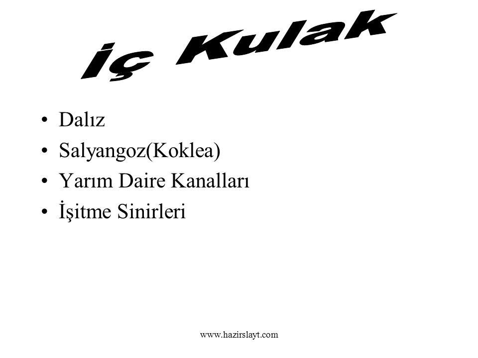 www.hazirslayt.com Karaciğer Pankreas