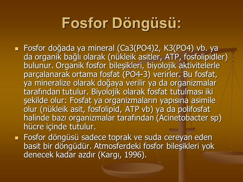 Fosfor Döngüsü: Fosfor doğada ya mineral (Ca3(PO4)2, K3(PO4) vb. ya da organik bağlı olarak (nükleik asitler, ATP, fosfolipidler) bulunur. Organik fos