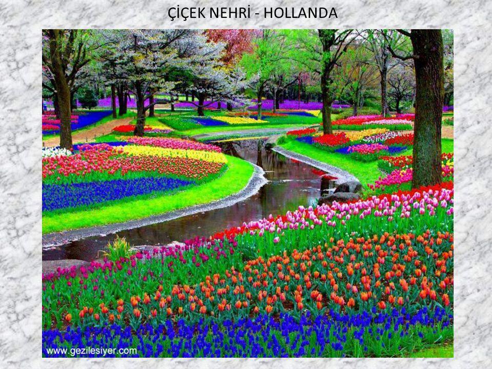 Talip Alaoğlu ÇİÇEK NEHRİ - HOLLANDA