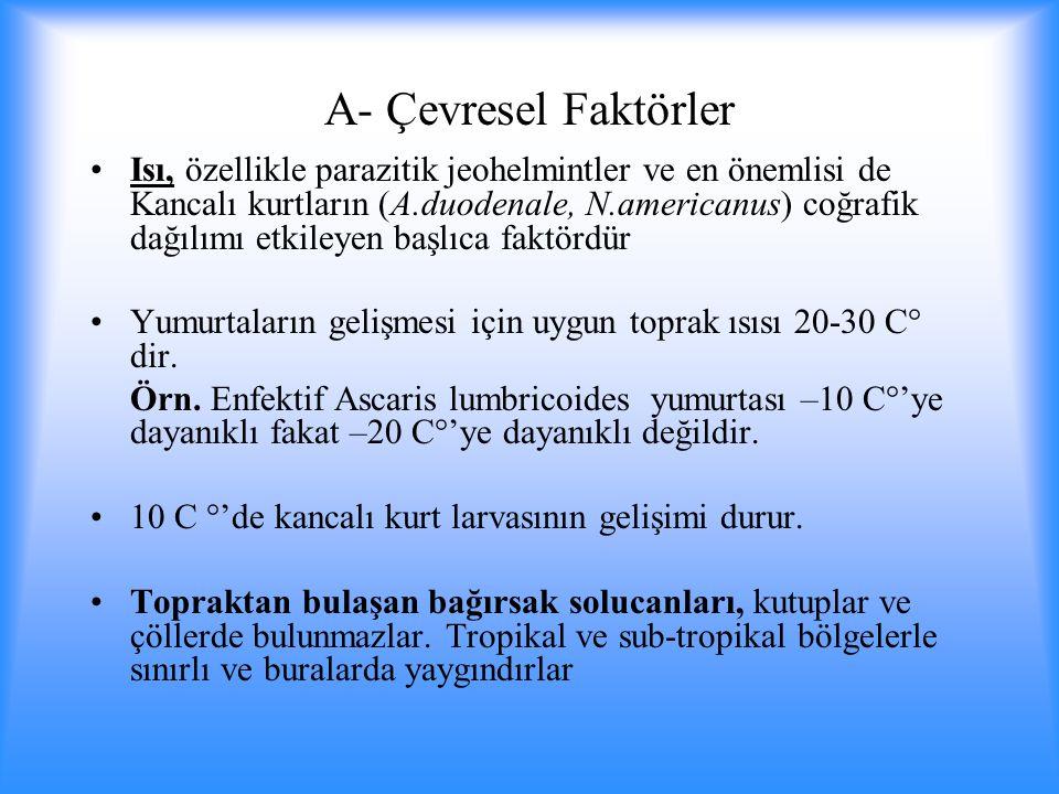 A- Çevresel Faktörler Isı, özellikle parazitik jeohelmintler ve en önemlisi de Kancalı kurtların (A.duodenale, N.americanus) coğrafik dağılımı etkileyen başlıca faktördür Yumurtaların gelişmesi için uygun toprak ısısı 20-30 C° dir.