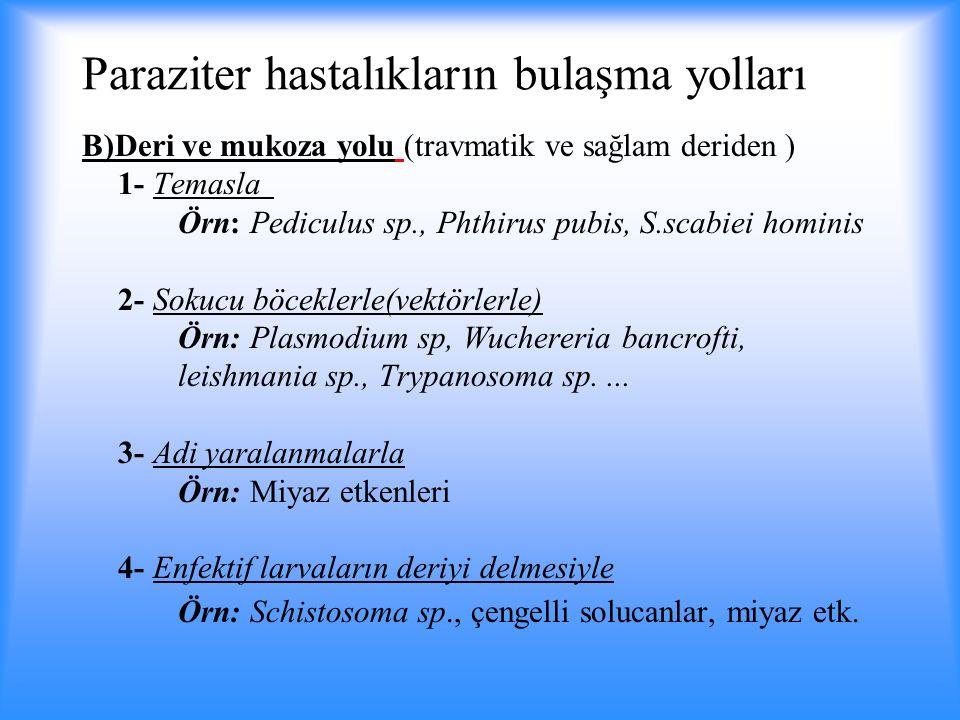 Paraziter hastalıkların bulaşma yolları B)Deri ve mukoza yolu (travmatik ve sağlam deriden ) 1- Temasla Örn: Pediculus sp., Phthirus pubis, S.scabiei hominis 2- Sokucu böceklerle(vektörlerle) Örn: Plasmodium sp, Wuchereria bancrofti, leishmania sp., Trypanosoma sp....