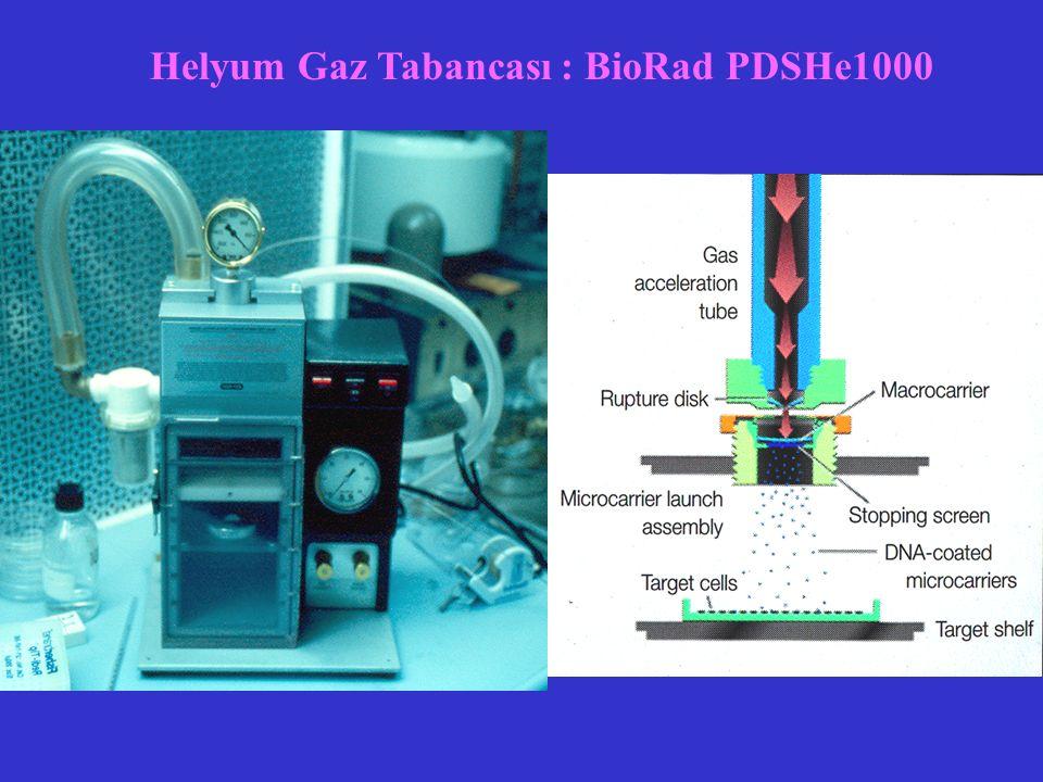 Helyum Gaz Tabancası : BioRad PDSHe1000