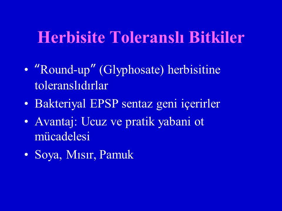 Herbisite Toleranslı Bitkiler Round-up (Glyphosate) herbisitine toleranslıdırlar Bakteriyal EPSP sentaz geni içerirler Avantaj: Ucuz ve pratik yabani ot mücadelesi Soya, Mısır, Pamuk