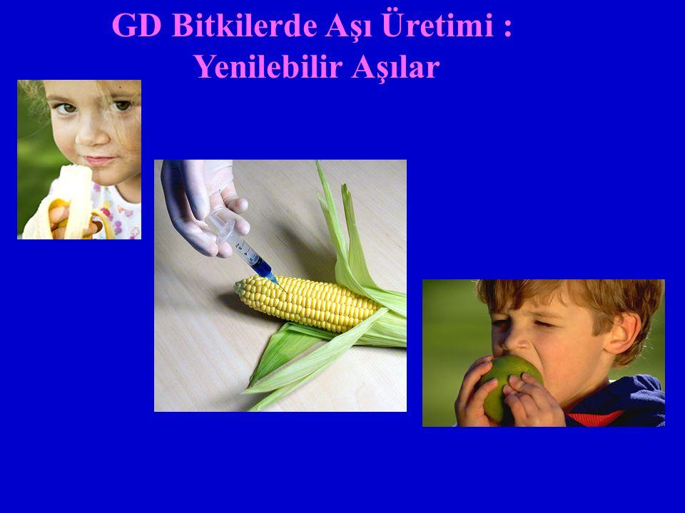 GD Bitkilerde Aşı Üretimi : Yenilebilir Aşılar