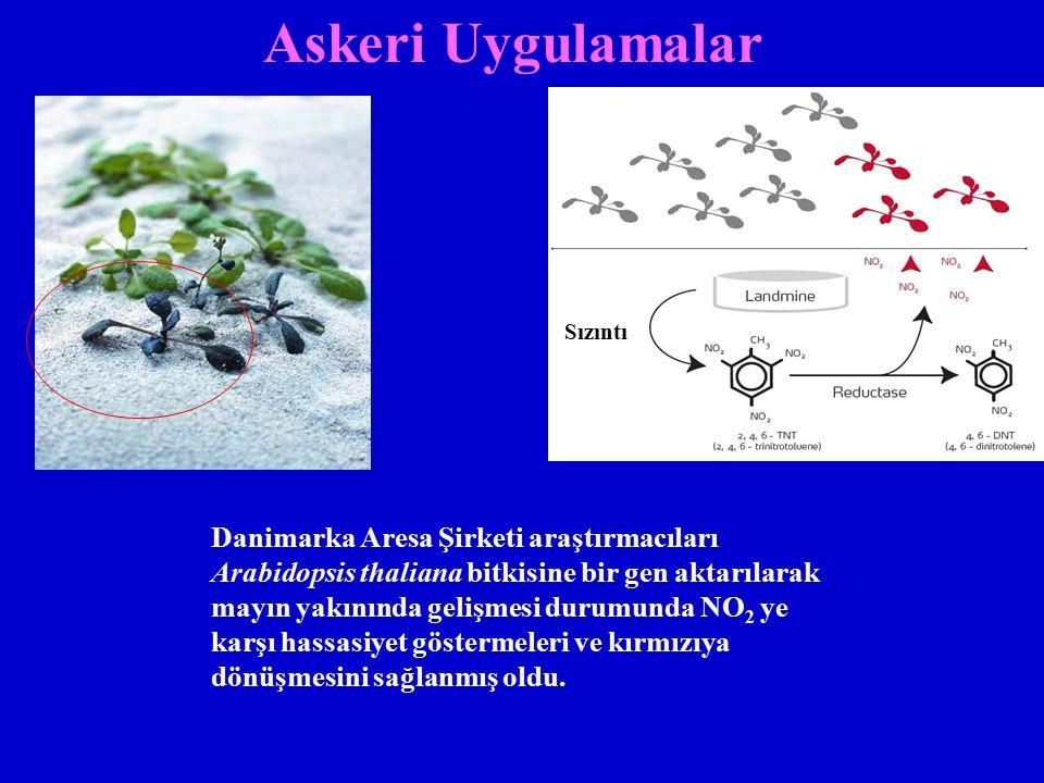 Askeri Uygulamalar Danimarka Aresa Şirketi araştırmacıları Arabidopsis thaliana bitkisine bir gen aktarılarak mayın yakınında gelişmesi durumunda NO 2 ye karşı hassasiyet göstermeleri ve kırmızıya dönüşmesini sağlanmış oldu.