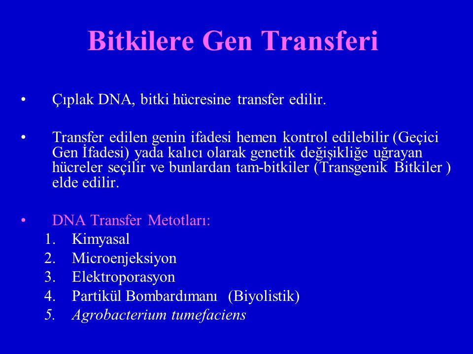 Bitkilere Gen Transferi Çıplak DNA, bitki hücresine transfer edilir. Transfer edilen genin ifadesi hemen kontrol edilebilir (Geçici Gen İfadesi) yada