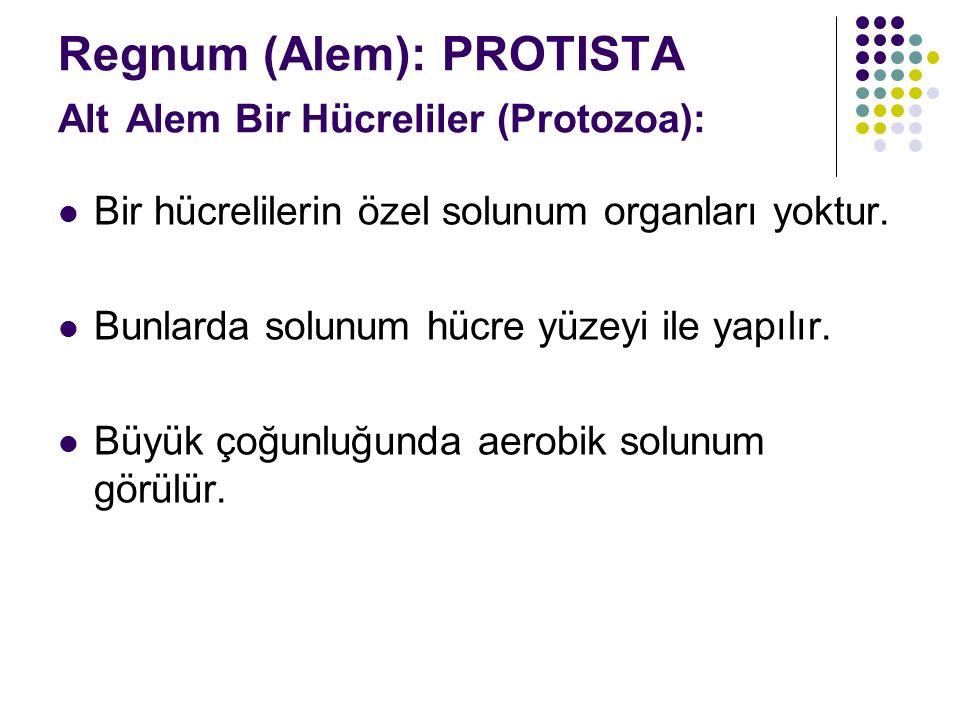 Regnum (Alem): PROTISTA Alt Alem Bir Hücreliler (Protozoa): Bir hücrelilerin özel solunum organları yoktur.
