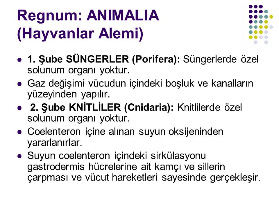 Regnum: ANIMALIA (Hayvanlar Alemi) 1.