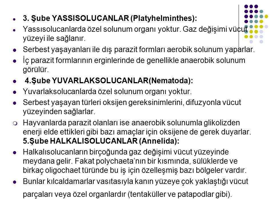 ● 3.Şube YASSISOLUCANLAR (Platyhelminthes): ● Yassısolucanlarda özel solunum organı yoktur.