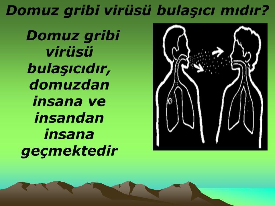 Domuz gribi virüsü bulaşıcı mıdır.